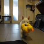 puppytest-5